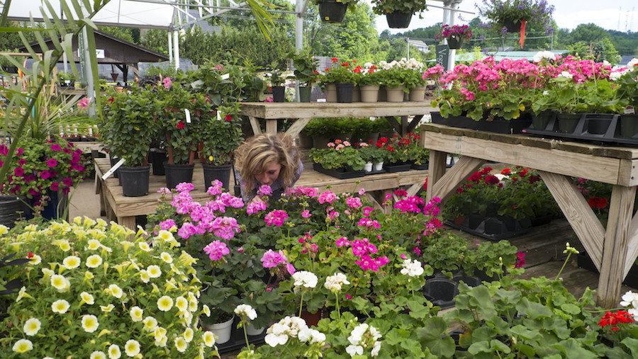 Marietta garden center tour greenleaf landscapes for Maria s garden center